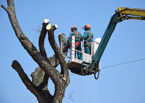 Tree Removal Kingsport TN