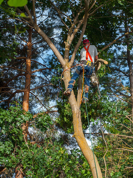Tree Service Kingsport Tn