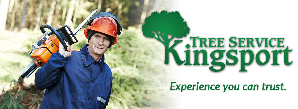 Tree Expert Kingsport TN